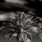Palm by Rachel Blumenthal