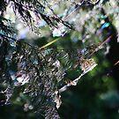 Cobwebs by Laura Puglia