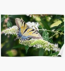 BUTTERFLY FRACTALIUS Poster