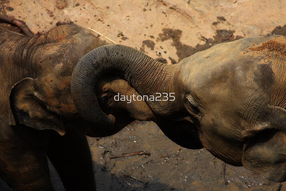 Elephants at Play by daytona235