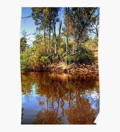 The Murray River & Young River Red Gums  Poster