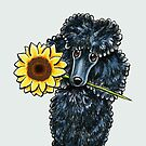 Sunny Black Miniature Poodle by offleashart