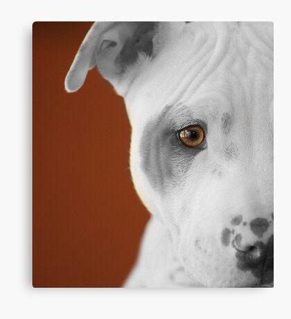 freckles the pit 3 Canvas Print