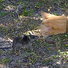 Mouse meet Cat by David Lee Thompson
