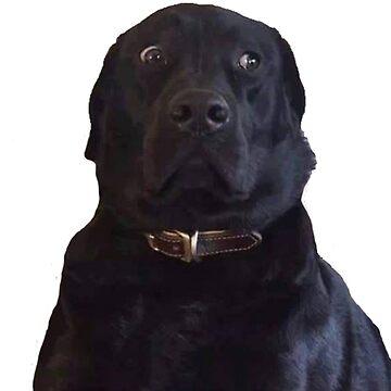 BLACK LABRADOR STARE DOGGO MEME by SHARMO