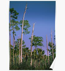 Flatwoods Poster