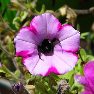 Bee Butt and Pollen For Dinner by WildestArt