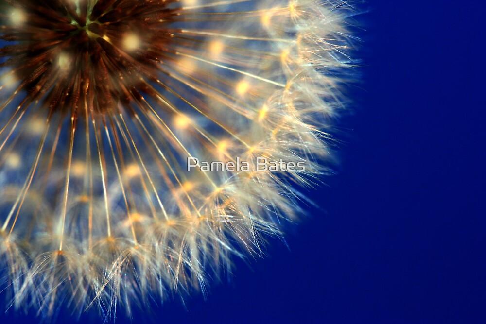 Nature's Ferris Wheel by Pamela Bates