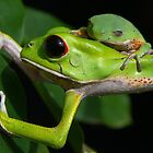 Frog Friends by Jason Weigner