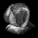 Delicate Beauty  by Heather Friedman