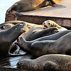 Sea Lions of Pier 39 by DonnaMoore