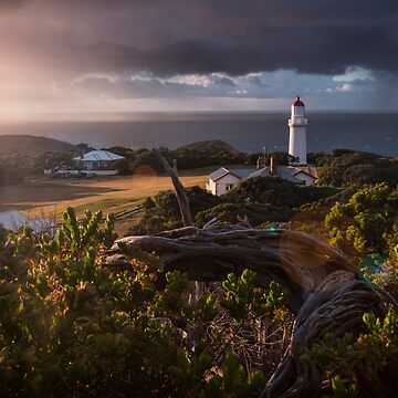Beautiful Morning Light Over Cape Schanck by ea-photos