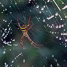 Raindrops on Spiders ... are a few of my favourite things by sienebrowne