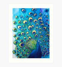 Full Glory Peacock Art Print
