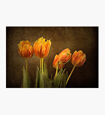 Tulips Together Photographic Print