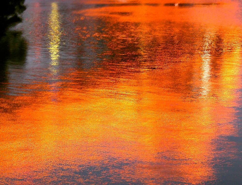 Shimmer by Lynette Higgs