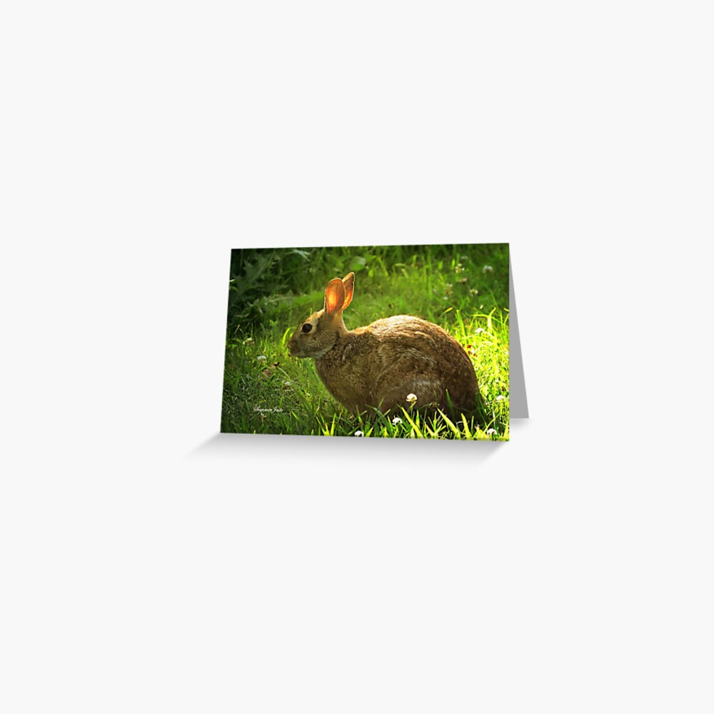 Wild Bunny ~ In a Patch of Clover Greeting Card