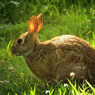 Wild Bunny ~ In a Patch of Clover by SummerJade