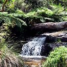 Waterfall at Araluen Botanic Park. Western Australia by Chris  Willis