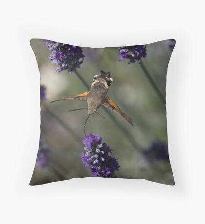 Humming Bird Moth 2 Throw Pillow