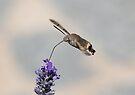 Humming Bird Moth 4 by David Clarke