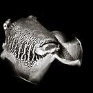 Cuttlefish in Motion by Rachel Blumenthal