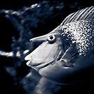 Unicorn Fish by Rachel Blumenthal
