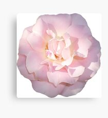 PINK01LIGHT_00310_SQ5K Canvas Print