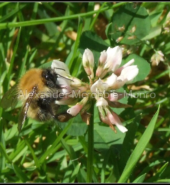 Bee 2  by Alexander Mcrobbie-Munro