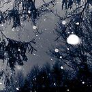 December Snow by Rachel Blumenthal