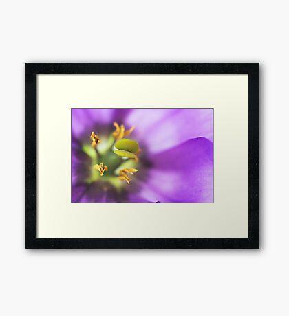 Purple Lisianthus Framed Print