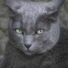 Grey Cat by simpsonvisuals