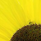 Spider & Sunflower by Nancy Barrett