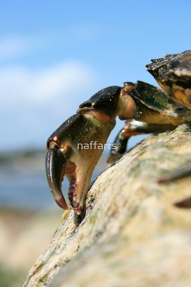 Crabs Claw by naffarts