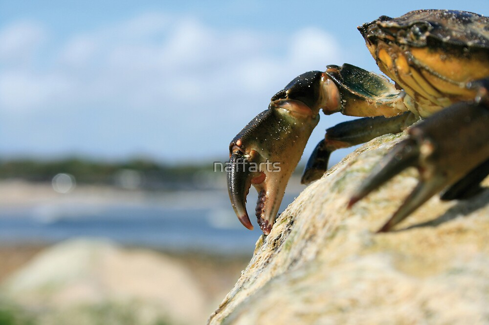 King Crab by naffarts
