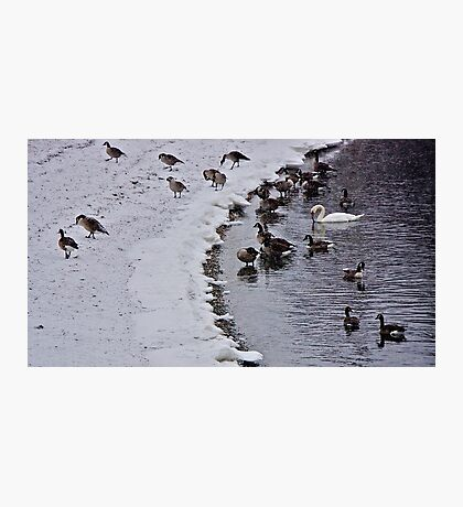 Stranger In the Flock ! Photographic Print