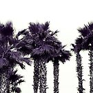 Infrared Palms by Rachel Blumenthal