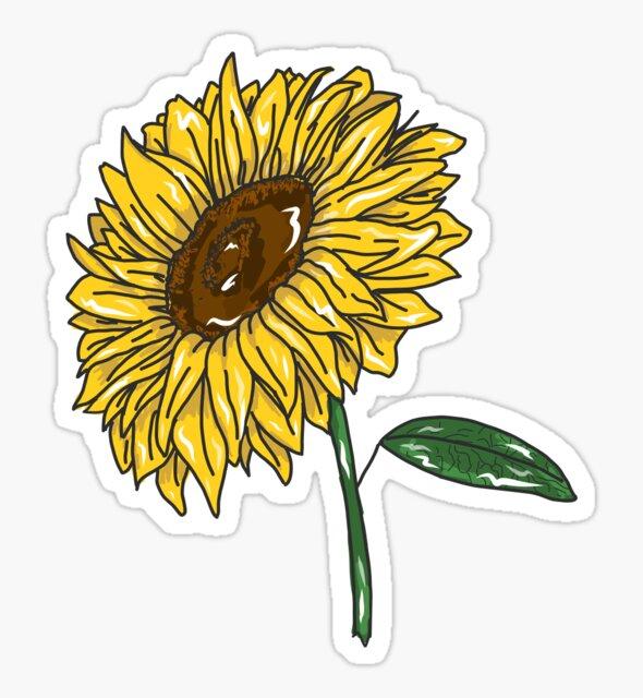sunflower by alana godfrey