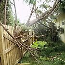 If a Tree Falls on Your House.... by Donna Adamski