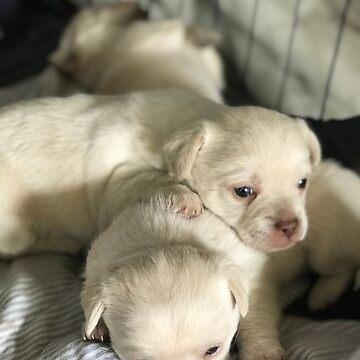 Doggos! by Hendrixxx