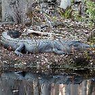 Alligator Blending In by Cynthia48