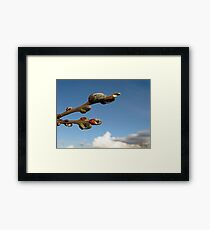 Willow Clouds Framed Print