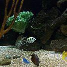 Fish Aquarium by Glenna Walker