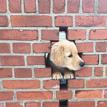 Dog in the Wall by PFCpatrickC