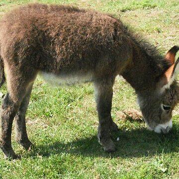 Fluffy foal by missmoneypenny