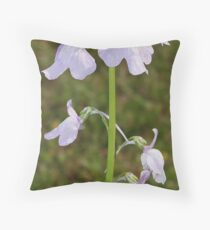 Toadflax - Linaria canadadensis Throw Pillow