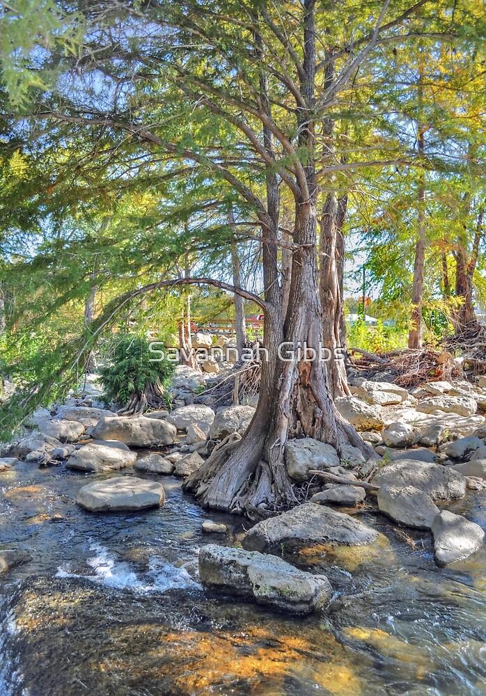 Cypress Tree by Savannah Gibbs