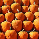 Pumpkins by Timothy Shepp