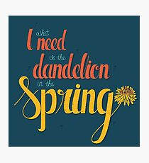 Dandelion in the spring Photographic Print