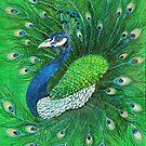 Peacock by Sheila Fielder
